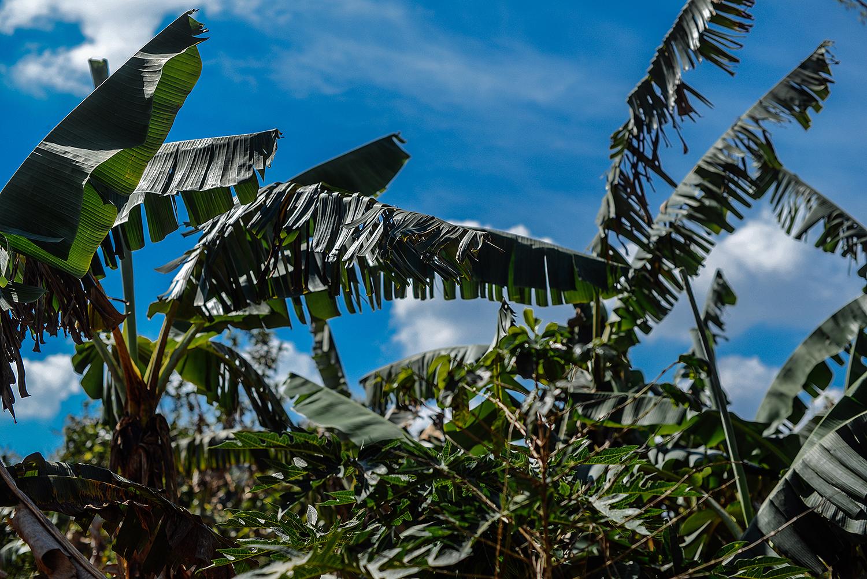Tabakregion Vinales_Kuba Urlaub Vinales_Vinales Reisetipps_Reiten Vinales_Pferde Vinales_Wandern Vinales_Kuba Reise Tipps_Vinales Kuba unterkunft-final1